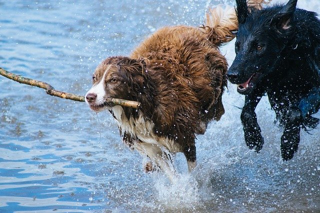 A dog playing in the water